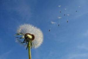 Wetter in Bremerhaven: Wolken, Sonnenstunden und Vorhersage