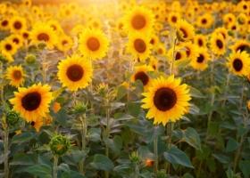 Wetter Prognose für Bottrop: Sonnenstunden, Vorhersage und Wochenende